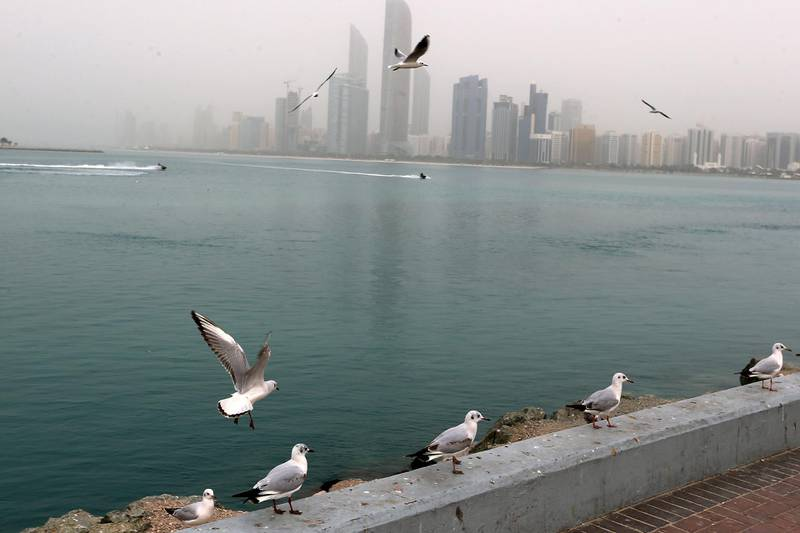 ABU DHABI, UNITED ARAB EMIRATES - - -  13 February 2017 --- Gray skies spread a blanket over the Abu Dhabi skyline on Monday, February 13, 2017, but did not put a damper on the spirit of people and birds that flocked to the breakwater. (  DELORES JOHNSON / The National  )   ID:   Reporter:  None Section: NA *** Local Caption ***  DJ-130217-NA-Standalone-007.jpg
