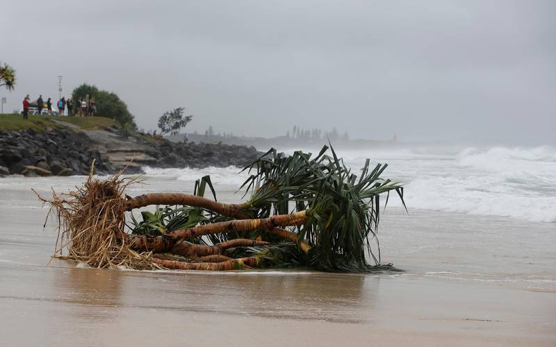 BYRON BAY, AUSTRALIA - DECEMBER 14:  Uprooted tree along the stretch of beach due to heavy rain on December 14, 2020 in Byron Bay, Australia. Byron Bay's beaches face further erosion as wild weather and hazardous swells lash the northern NSW coastlines. (Photo by Regi Varghese/Getty Images)