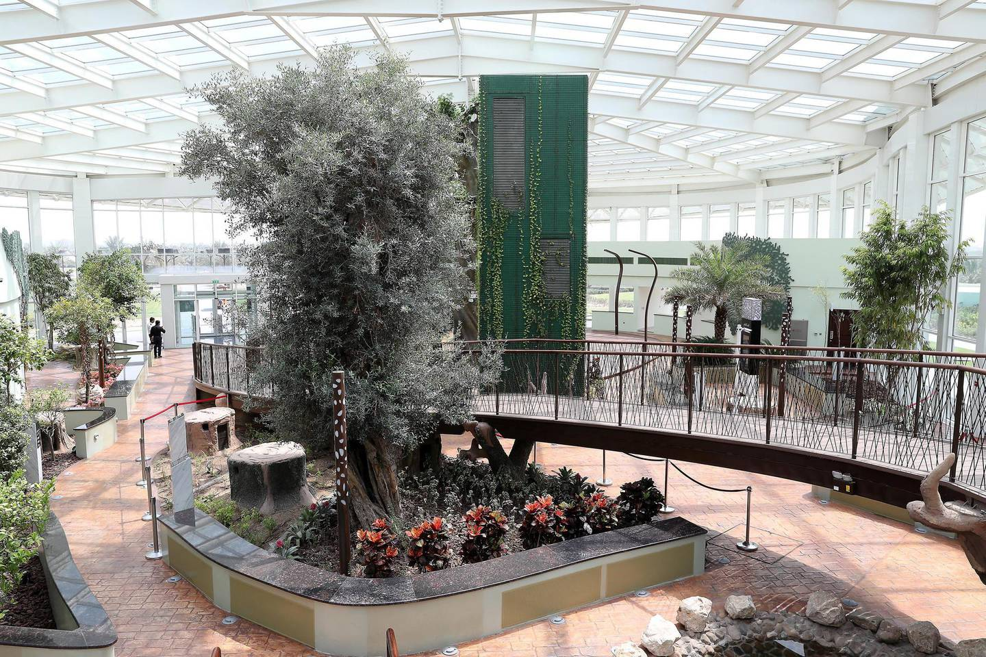 DUBAI ,  UNITED ARAB EMIRATES , AUGUST 26 – 2019 :- Various types of trees planted inside the Glass House at the Quranic Park in Dubai. ( Pawan Singh / The National ) For Weekend Postcard. Story by Katy