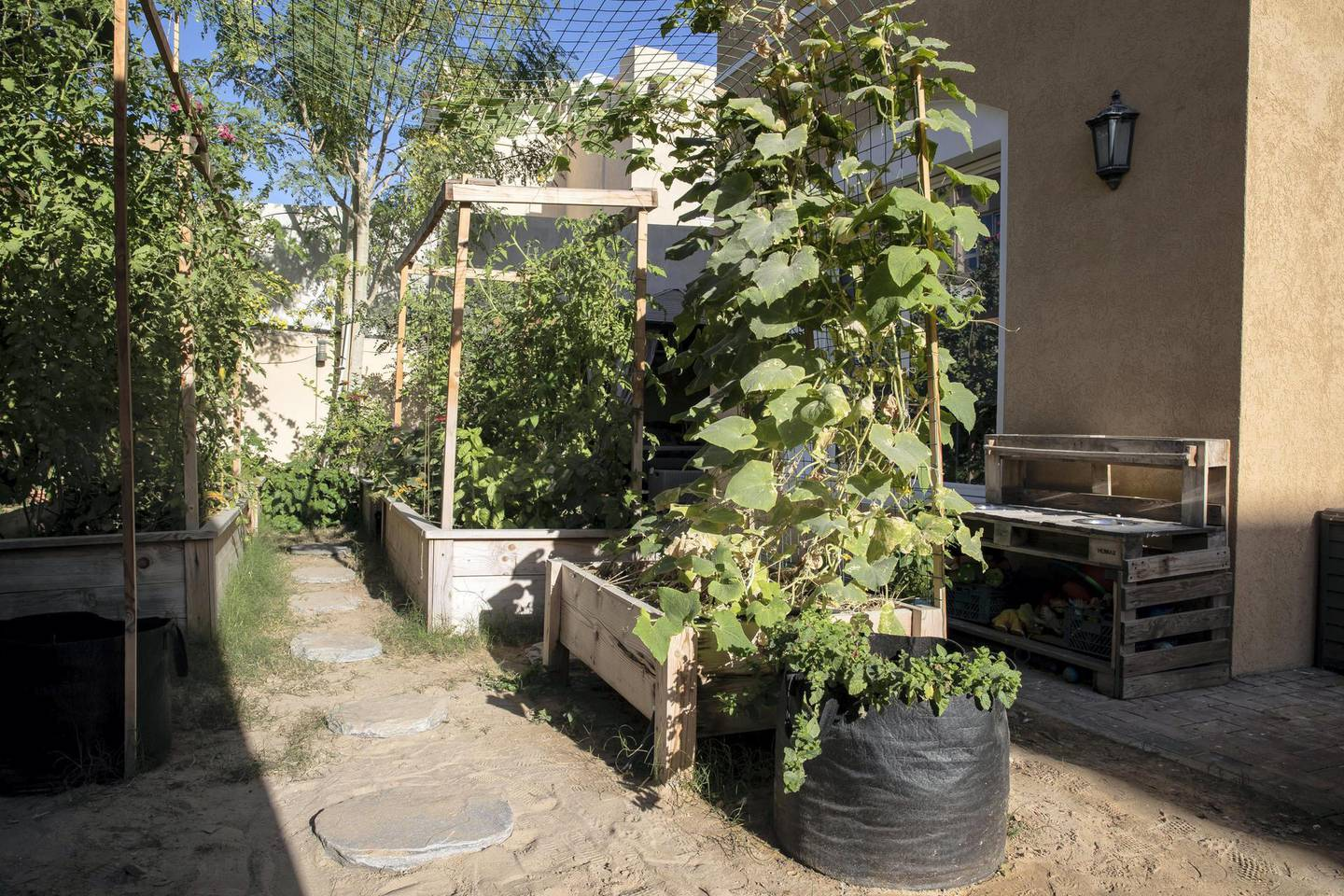 DUBAI, UNITED ARAB EMIRATES. 12 JANUARY 2021. The organic home food garden of Mohammed Al Dhuhouri, founder of Local Roots, a company that encourages sustainable organic farming. (Photo: Antonie Robertson/The National) Journalist: David Tusing. Section: Business.