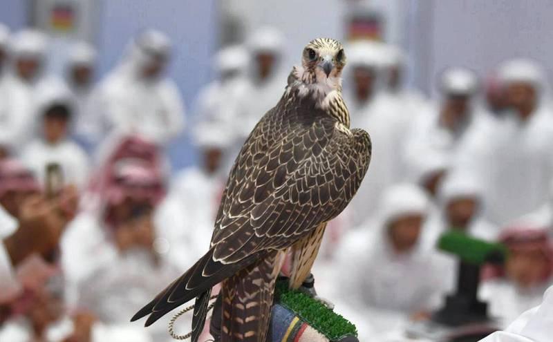 "ADIHEX Announces the ""Most Beautiful Captive-Bred Falcons"" Contest. Courtesy ADIHEX"