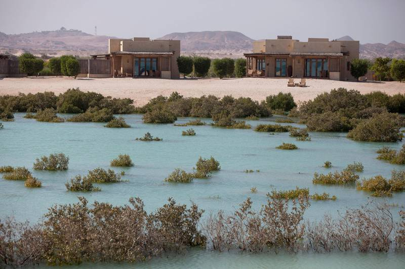 SIR BANI YAS ISLAND, ABU DHABI, United Arab Emirates, Nov. 26 , 2014:   Mangroves line the bay near the Anantara Al Yamm Villa Resort on the Sir Bani Yas Island, one of the largest natural island in the UAE, as seen on Wednesday, Nov. 26, 2014. Each of the visiting guests gets to plant a mangrove, and thus to contribute to the stability of the local ecosystem. The tourism destination, developed and managed by the Tourism and Development Investment Company (TDIC) is located off the coast of Al Gharbia, or the Western Region, and about 250-kilometer drive from Abu Dhabi. The island, a wildlife reserve founded by the late Sheikh Zayed bin Sultan al Nahyan in 1971 to preserve Arabia's endangered species, is now home to 25 free-roaming mammals, 177 kinds of birds, about 100 different species of insect, and over 100 small plants.   (Silvia Razgova / The National)  Usage: undated Section: all Reporter: Silvia Razgova