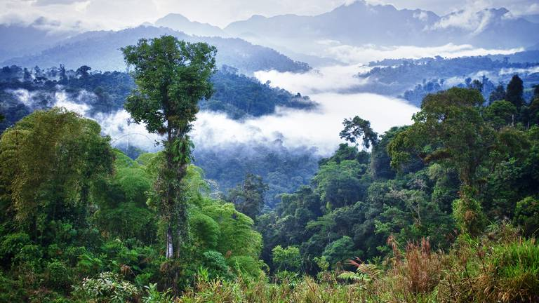 An image that illustrates this article South American plants hold key to malaria cure