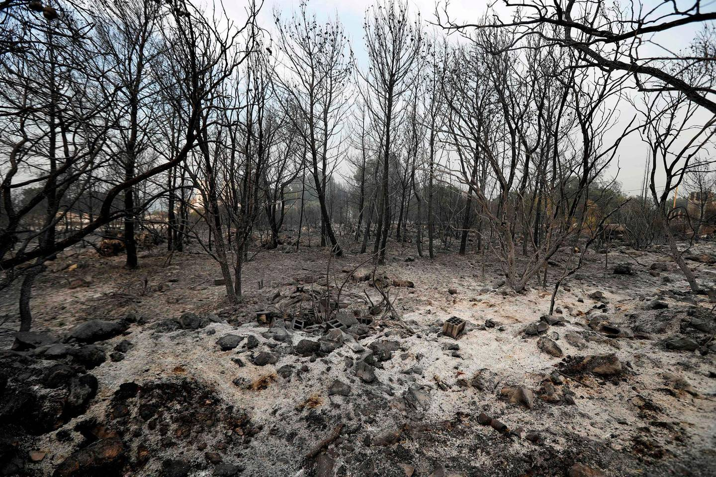 Calcined trees stand in an ash-covered field after fires broke out around the village of Meshref in Lebanon's Shouf mountains, southeast of the capital Beirut on October 15, 2019.  Flames devoured large swaths of land in several Lebanese and Syrian regions. The outbreak coincided with high temperatures and strong winds, according to the official media in both countries. / AFP / JOSEPH EID
