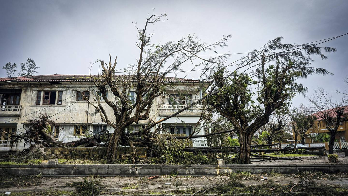 Fallen trees and downed power lines sit on the side of the road in Beira, Mozambique, March 22, 2019. Jack Moore / The National