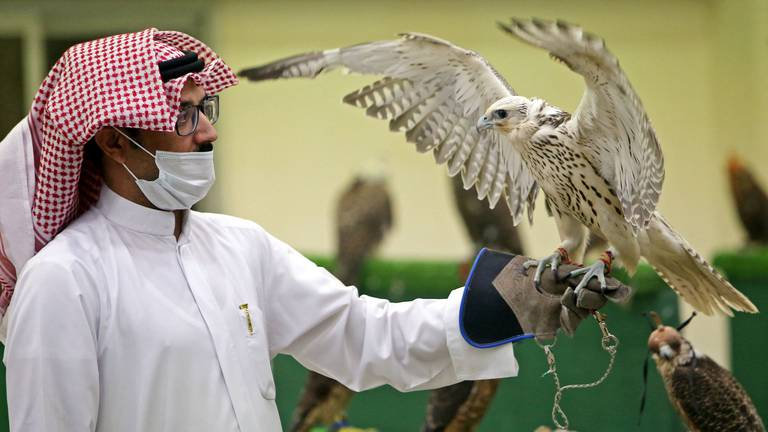 An image that illustrates this article Kuwait's first falcon auction since start of pandemic - in pictures
