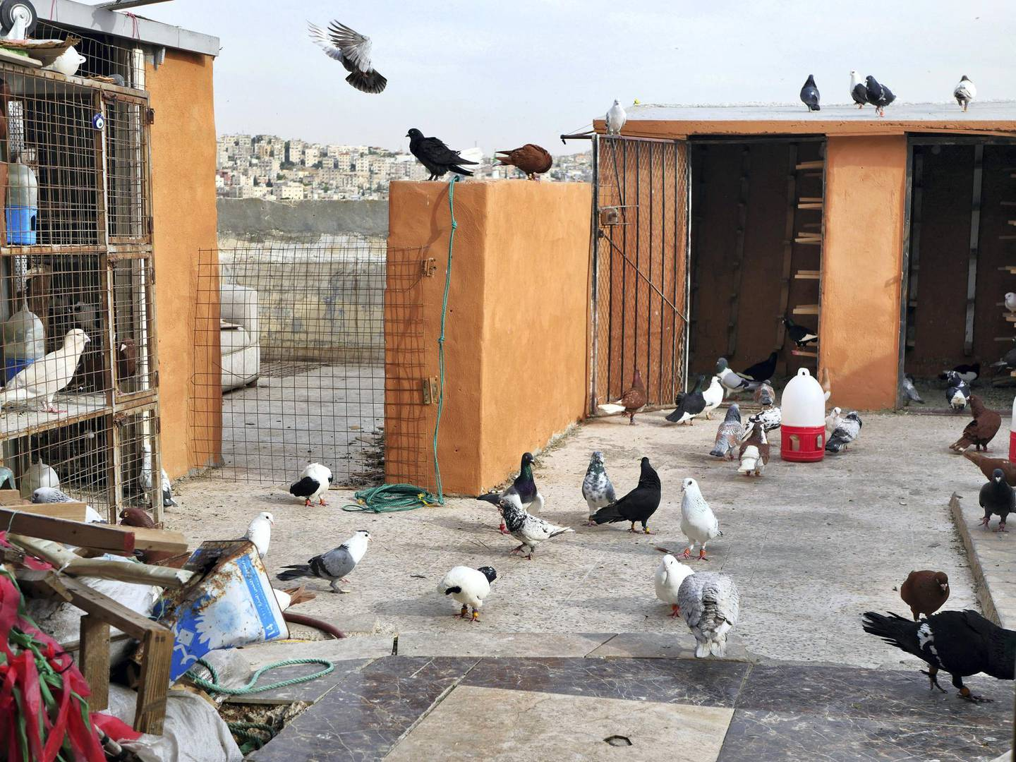 Zaid Al-Otayat family's rooftop in Amman which houses almost 400 pigeons of varying colours and markings. Picture by Charlie Faulkner