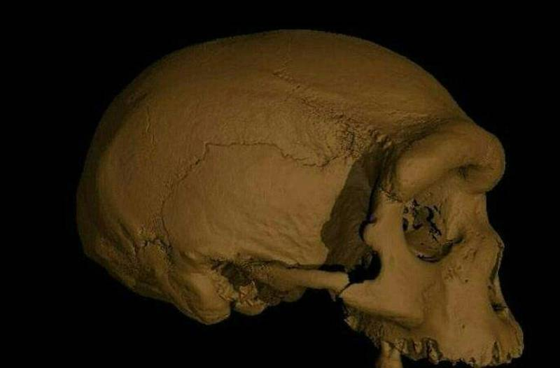 """A handout screen grab obtained on June 25, 2021 from EurekAlert! shows a virtual reconstruction of the Harbin cranium.  Scientists announced Friday that a skull discovered in Northeast China represents a newly discovered human species they have named Homo longi or """"Dragon Man,"""" and the lineage may replace Neanderthals as our closest relatives. - RESTRICTED TO EDITORIAL USE - MANDATORY CREDIT """"AFP PHOTO /BYLINE """" - NO MARKETING - NO ADVERTISING CAMPAIGNS - DISTRIBUTED AS A SERVICE TO CLIENTS  / AFP / EUREKALERT! / Xijun Ni / RESTRICTED TO EDITORIAL USE - MANDATORY CREDIT """"AFP PHOTO /BYLINE """" - NO MARKETING - NO ADVERTISING CAMPAIGNS - DISTRIBUTED AS A SERVICE TO CLIENTS"""