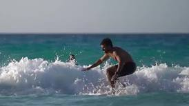 Reported shark attack causes panic and closes beaches on Egypt's north coast