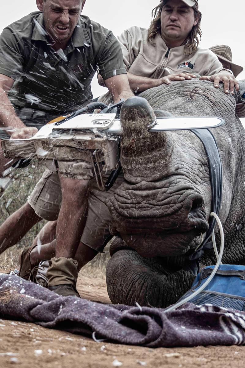 Neville Kgaugelo Ngomane - Desperate Measures (Limpopo, South Africa) It is unusual for someone like me to attend a dehorning. It is not easy to watch but this is a last ditch attempt to keep rhinos safe from poaching.