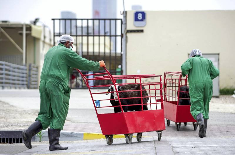 Abu Dhabi, United Arab Emirates, April 20, 2020.   -- Last ride.  Livestock being carted from the Abu Dhabi Livestock Market to the Public Slaughter House which is directly across the street.Victor Besa / The NationalSection:  NAFor:  Stock images