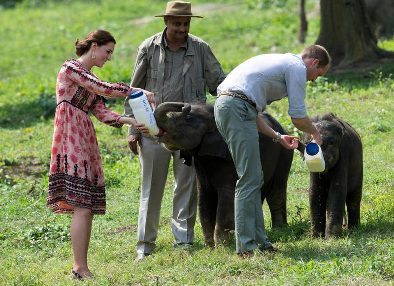 KAZIRANGA, INDIA - APRIL 13:  Catherine, Duchess of Cambridge and Prince William, Duke of Cambridge feed baby elephants during a visit to the Centre for Wildlife Rehabilitation and Conservation, at Kaziranga National Park on April 13, 2016 in Guwahati, India. The Duke and Duchess of Cambridge are on a week-long tour of India and Bhutan taking in Mumbai, Delhi, Assam, Bhutan and Agra.  (Photo by Arthur Edwards - Pool/Getty Images)