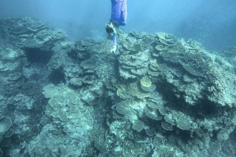 LADY ELLIOT ISLAND, AUSTRALIA - APRIL 12:  Gillian Backhouse of Australia swims to view coral during an athlete Great Barrier Reef experience on day eight of the Gold Coast 2018 Commonwealth Games at the Great Barrier Reef on April 12, 2018 on Lady Elliot Island, Australia.  (Photo by Mark Kolbe/Getty Images for Tourism Queensland)