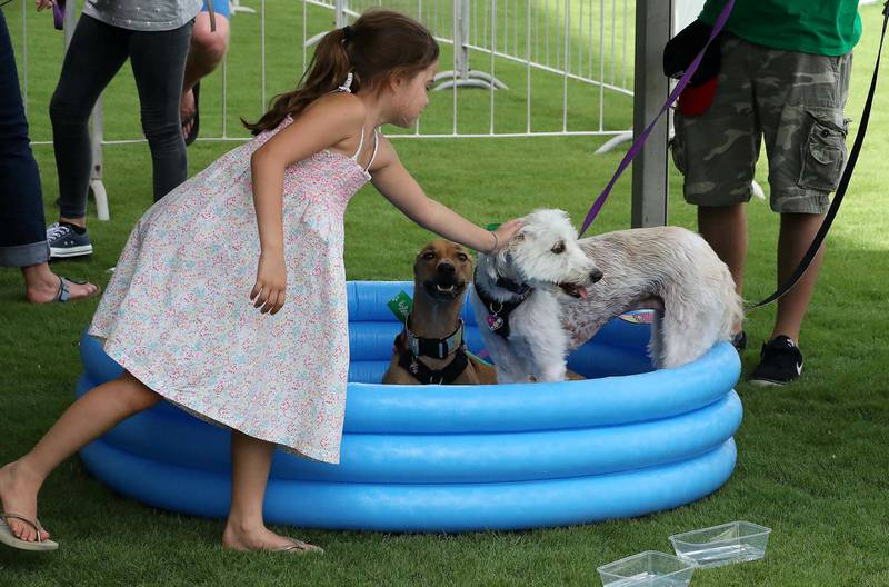 ABU DHABI , UNITED ARAB EMIRATES , APRIL 13   – 2018 :- People cooling their pets at the pet water station during the pet festival held at DU arena on Yas Island in Abu Dhabi. ( Pawan Singh / The National ) For News