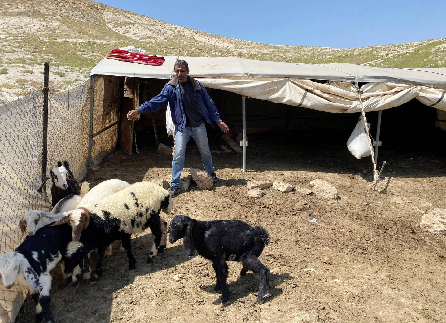 A Palestinian bedouin man looks after his sheep and goats amid concerns about the spread of the coronavirus disease (COVID-19) in al-Ubeidiya town near Bethlehem in the Israeli-occupied West Bank April 3, 2020. Picture taken April 3, 2020. REUTERS/Mustafa Ganeyeh