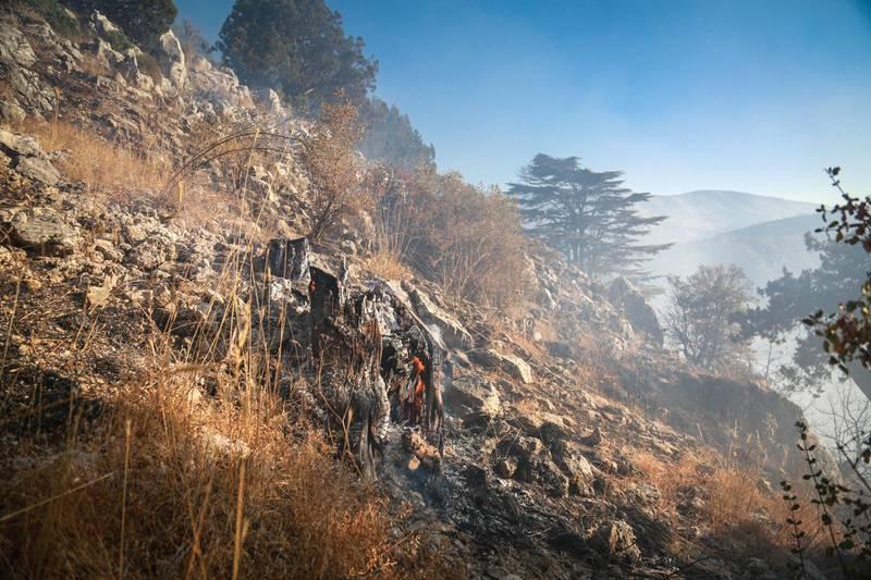 Scorched vegetation in Jird Meshmesh, in Lebanon's Akkar region on Aug. 24, 2020. Khaled Taleb for The National