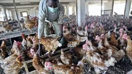 UAE health officials ban bird import after virus warning