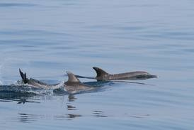 UAE public asked to help with dolphin sighting project