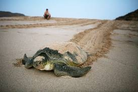 Abu Dhabi releases red list of at-risk species