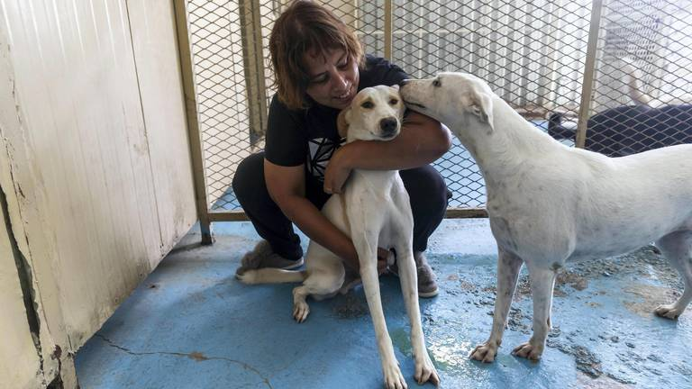 An image that illustrates this article An animal lover is doing great work