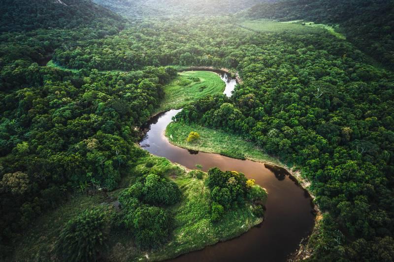 Mata Atlantica - Atlantic Forest in Brazil. Getty Images