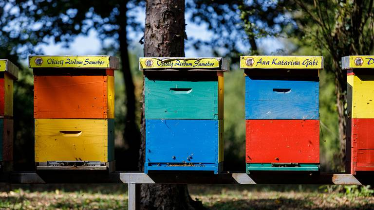 An image that illustrates this article Croatia farm offers 'bee hotel' for busy keepers