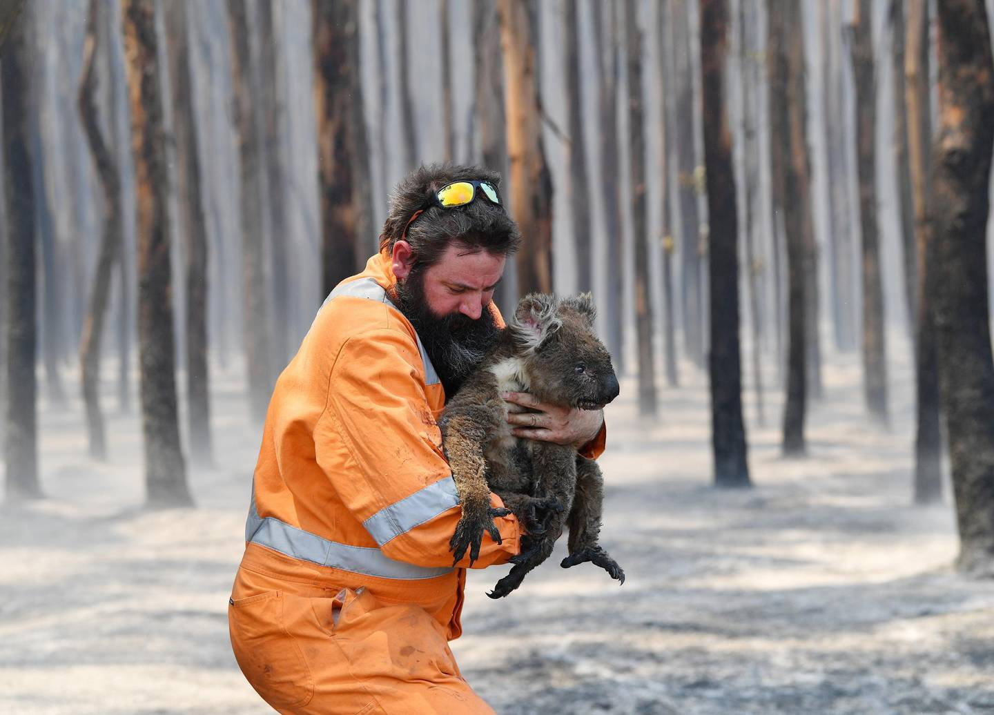 Adelaide wildlife rescuer Simon Adamczyk is seen with a koala rescued at a burning forest near Cape Borda on Kangaroo Island, southwest of Adelaide, Australia, January 7, 2020.   AAP Image/David Mariuz/via REUTERS    ATTENTION EDITORS - THIS IMAGE WAS PROVIDED BY A THIRD PARTY. NO RESALES. NO ARCHIVE. AUSTRALIA OUT. NEW ZEALAND OUT.