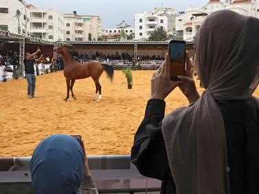 Arabian horse beauty contest in Hebron - in pictures