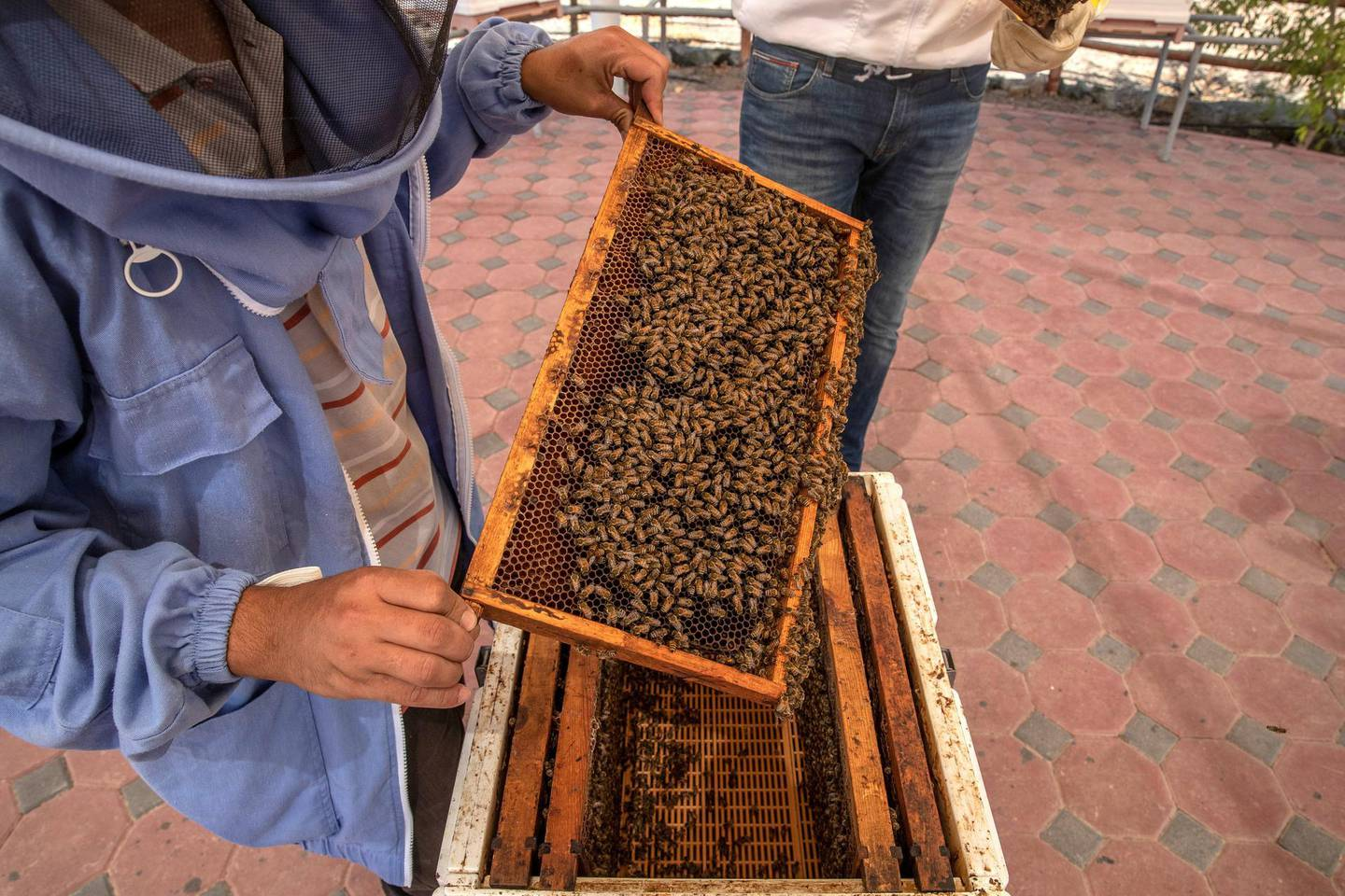DUBAI, UNITED ARAB EMIRATES. 06 OCTOBER 2020. JA Hatta Fort Hotel has launched a collaboration with the Hatta Honey Bee Discovery Centre to use theyr products in the Food and Beverage menu of the hotel. Mohamed Quertani, Garden Manager, conducts a tour around the sanctuary explain the importance of bees and the different aspects of the farm. (Photo: Antonie Robertson/The National) Journalist: janice Rodriguez. Section: Arts & Life.