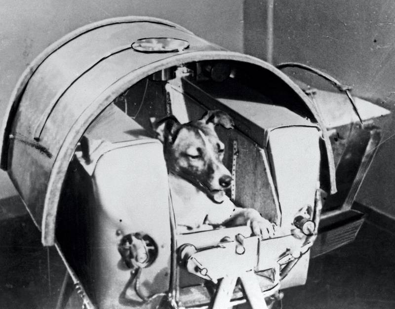 Picture from the Soviet daily Pravda dated 13 November 1957 of the dog Laika, the first living creature ever sent in space, onboard Sputnik II. Soviet spacecraft Sputnik 2 was launched from the Baikonur cosmodrome in Kazakhstan, 03 November 1957. Laika died a few hours after launch from stress and overheating, likely due to a malfunction in the thermal control system. / AFP PHOTO / TASS / -