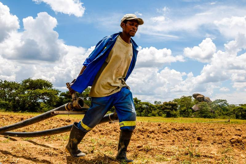 A worker at a farm owned by Zimbabwean commercial farmer Rob Smart pulls irrigation pipes for a potato crop at Lesbury Estates in Headlands east of the capital Harare on February 1, 2018 days after Smart was allowed to return to his land. When the riot police arrived, Zimbabwean farmworker Mary Mhuriyengwe saw her life fall apart as her job and home disappeared in the ruthless land seizures that defined Robert Mugabe's rule. Mhuriyengwe, 35, watched as police carrying AK47 rifles released teargas to force white farmer Robert Smart off his land in June 2017 -- perhaps the last of 18 years of evictions that helped to trigger the country's economic collapse.  / AFP PHOTO / Jekesai NJIKIZANA