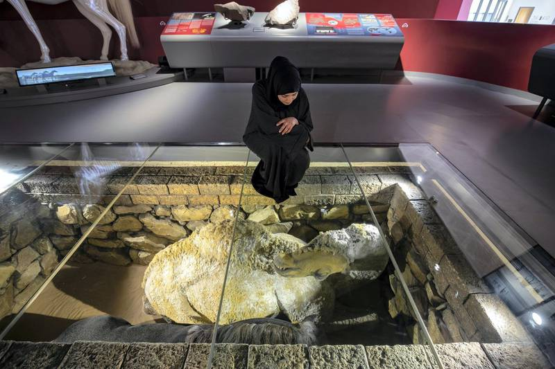 Sharjah, United Arab Emirates - July 10, 2019: Weekend's postcard section. Amna Albadri looks at a baliya practice where the people buried the dead along with a camel or a horse or both (mostly the animals they owned) in a senate grave at the Mleiha Archaeological Centre. Wednesday the 10th of July 2019. Maleha, Sharjah. Chris Whiteoak / The National