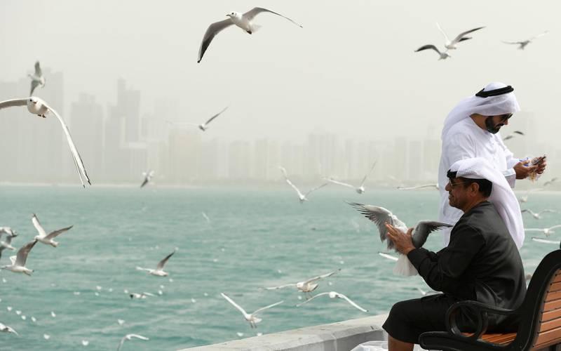 Abu Dhabi, United Arab Emirates - Local men catch hold of a seagull along the Abu Dhabi Corniche. Khushnum Bhandari for The National