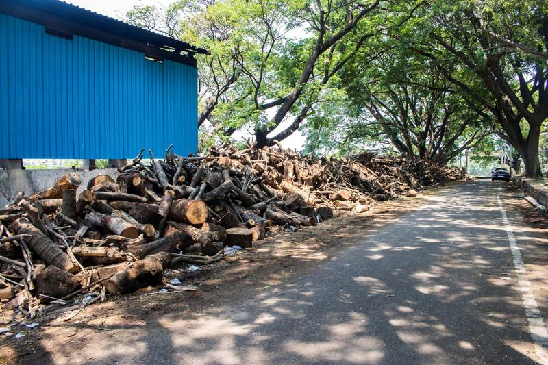 Tons of wood lying outside a crematorium in Kolhapur. Often Jitendra helps the officials lift the bodies of COVID patients when no one comes to help. Sanket Jain for The National