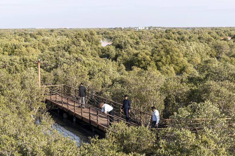 ABU DHABI, UNITED ARAB EMIRATES. 30 JANUARY 2020. The newly launched Mangrove Walk at Al Jubail Islandi. (Photo: Antonie Robertson/The National) Journalist: Janice Rodrigues. Section: National.