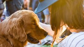 As temperatures rise, Dubai vet warns pet owners to be vigilant of heatstroke symptoms