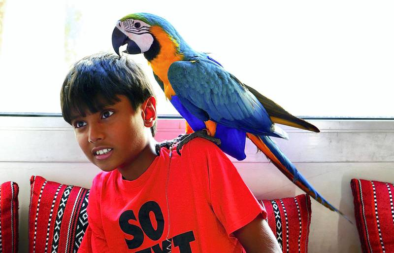 Zyman with his four months old Macaw Elijah at his home in the Living Legends in Dubai on April 22,2021. Pawan Singh / The National. Story by Nick Webster