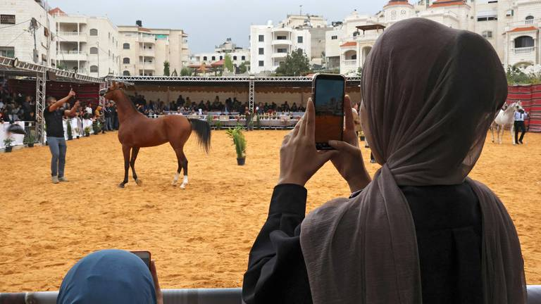 An image that illustrates this article Arabian horse beauty contest in Hebron - in pictures