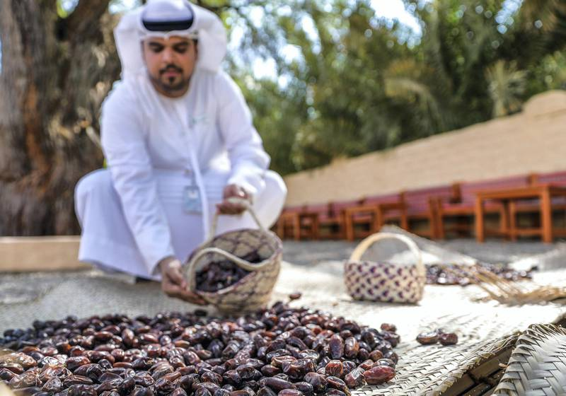"""Al Ain, United Arab Emirates, October 7, 2019.  Weekend – photo essay Discovering agricultural practices at Al Ain Oasis: there's a new programme that introduces visitors to the UAE's plant species, crops and agriculture professions running throughout October and November.-- Dates welcome visitors for """"Kenaz"""", the traditional way of storing dates after the date harvest season.  Hilal Al Kuwaiti demonstrates this.Victor Besa / The NationalSection:  WKReporter:  Katy Gillett"""