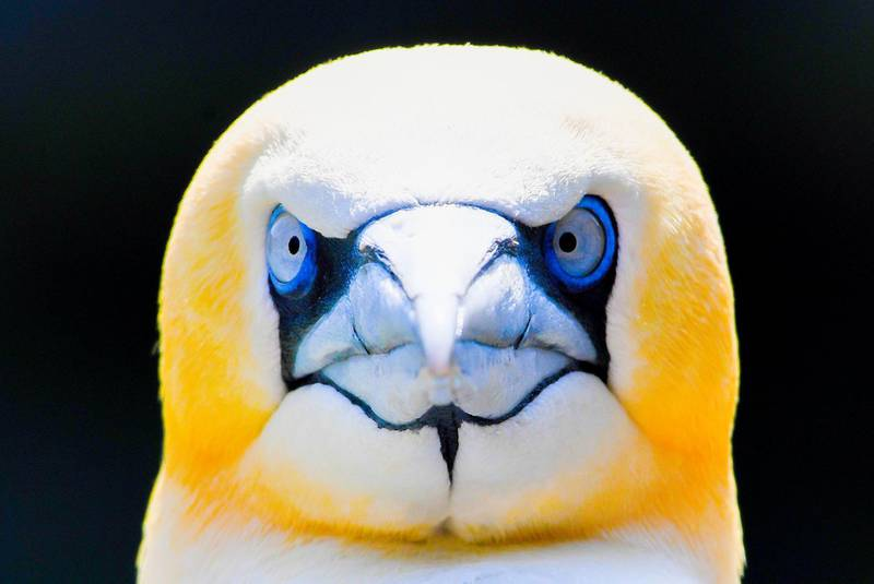 TOPSHOT - A gannet looks on in his enclosure at the Zoo in Bremerhaven, nothern Germany, on June 7, 2018.   -   / AFP / Patrik STOLLARZ