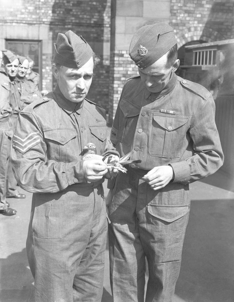 Members of the Home Guard with their racing pigeons at Blackburn in Lancashire, during World War II, 31st July 1940. The pigeons are being trained as messengers. (Photo by Fox Photos/Hulton Archive/Getty Images)