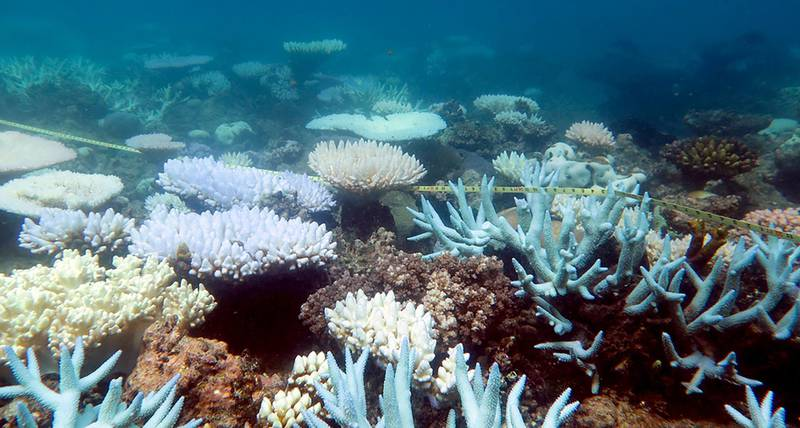"""An undated handout photo received from ARC Centre of Excellence for Coral Reef Studies on April 19, 2018 shows a mass bleaching event of coral on Australia's Great Barrier Reef. - The Great Barrier Reef suffered a """"catastrophic die-off"""" of coral during an extended heatwave in 2016, threatening a broader range of reef life than previously feared, a report revealed on April 19, 2018. (Photo by MIA HOOGENBOOM / ARC Centre of Excellence for Coral Reef Studies. / AFP)"""