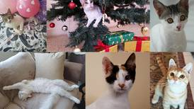 International Cat Day: UAE residents share stories of their rescue cats