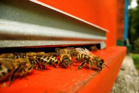 Bee-keeping in Saudi Arabia's sweet spot