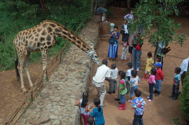 APRIL 2010, KENYA: School children feed a giraffe at the Giraffe Centre in Nairobi. The centre also educates Kenyan children on the benefits of environmental conservation. MATT BROWN/THE NATIONAL