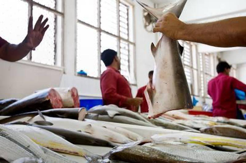 United Arab Emirates - Ras Al Khaimah - April 15, 2010:  NATIONAL: A fisherman hands half of a shark to a customer at the Ras Al Khaimah Fish Market in Ras Al Khaimah on Thursday, April 15, 2010. The rising cost of petrol has affected their profit. Amy Leang/The National