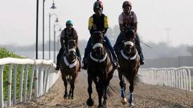 The day starts early for Dubai's horse stable lads
