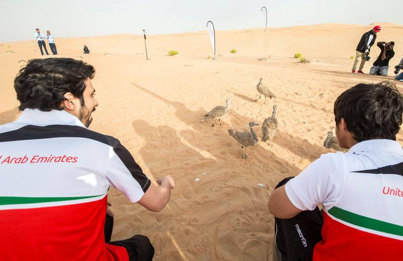 AL AIN, UNITED ARAB EMIRATES - Members of the UAE Special Olympics preparing to release the birds at the release of 50 Houbara birds into their Habitat of the UAE desert by The International Fund for Houbara Conservation (IFHC).  Leslie Pableo for The National
