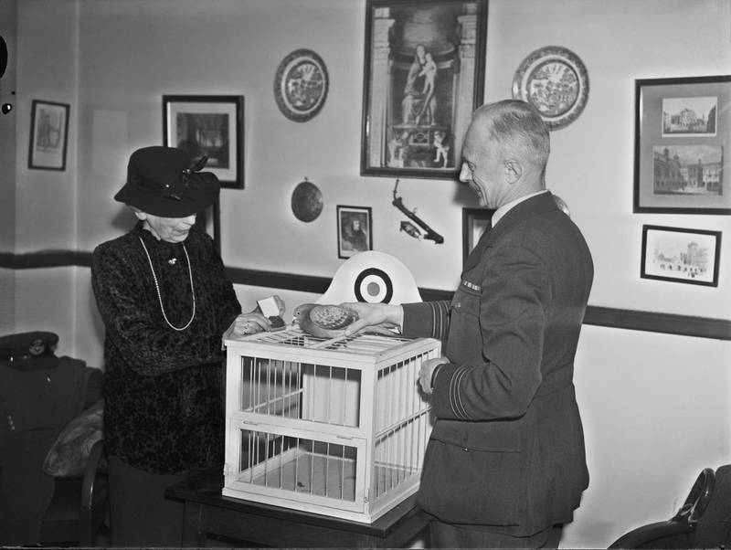 Maria Dickin (1870 - 1951), founder of the People's Dispensary for Sick Animals (PDSA) veterinary charity, presents RAF homing pigeon 'Winkie' with the Dickin medal, 19th February 1944. The Dickin medal recognizes the contribution of animals in wartime. Winkie delivered a message that contributed to the rescue of a ditched aircrew in February 1942. (Photo by Harry Todd/Fox Photos/Hulton Archive/Getty Images)