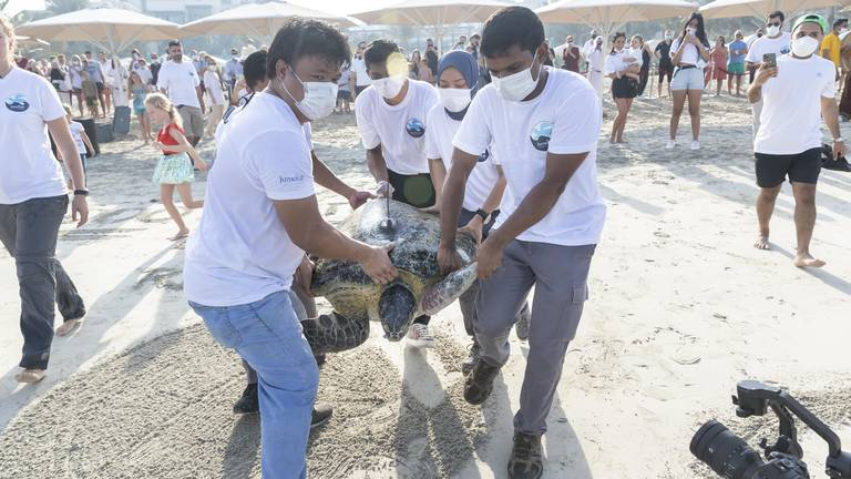 An image that illustrates this article 'Turtle sheikh' urges UAE public to report injured creatures on hotline